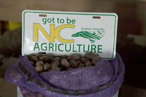 N.C. pecan growers prevail, good crop for Thanksgiving