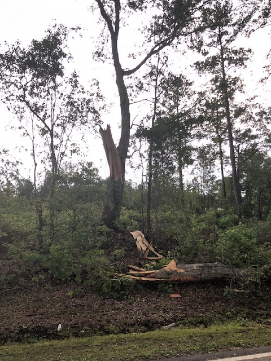 Tree Damage from Heavy Storms in County