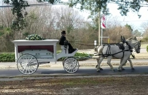 The body of late centenarian Sena Mae Parker is pulled past Hamlet City Lake by a team of horses on the way to Pemberton Temple Church of God in Christ for her funeral late Monday morning.