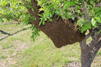 Honey-Making & Beekeeping