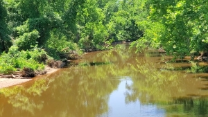 Kayaker rescued on Pee Dee River