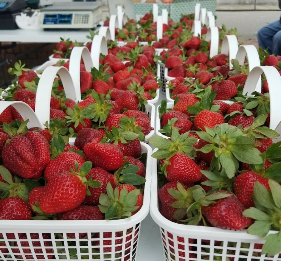 The EDMA has set the inaugural Strawberry Festival for Saturday, May 12, 2018.