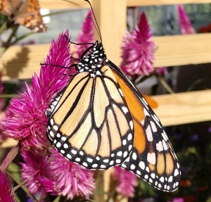 Birds, blooms, bees, butterflies and Bioblitz on Mother's Day weekend at N.C. Zoo