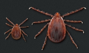 State Veterinarian reminds livestock and pet owners to watch out for ticks