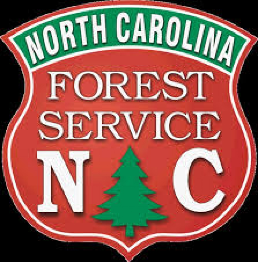 N.C. Forest Service offers discount to military members for seedling orders