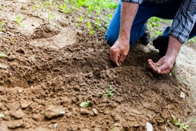 How to use previous soil test results for yards and home gardens